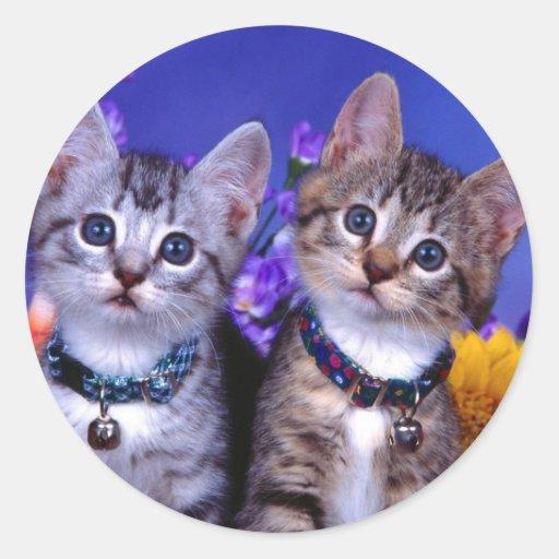 Kitten Duo Classic Round Sticker