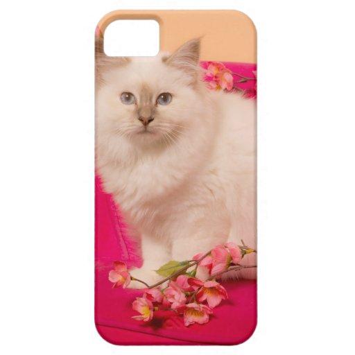 kitten él pink carne iPhone 5 Case-Mate cobertura