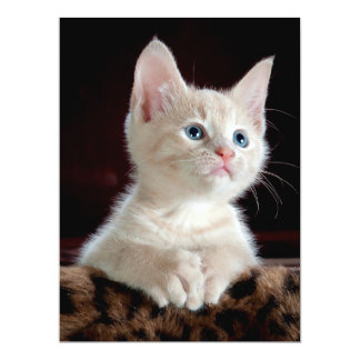 KITTEN: ENTRANCING MOMENT ~ CARD