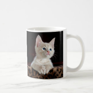 KITTEN: ENTRANCING MOMENT ~ COFFEE MUG
