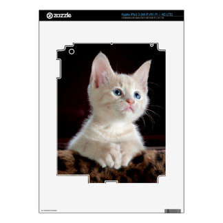 KITTEN: ENTRANCING MOMENT ~ iPad 3 SKIN