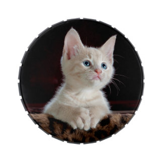 KITTEN: ENTRANCING MOMENT ~ JELLY BELLY CANDY TINS