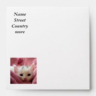 kitten envelope