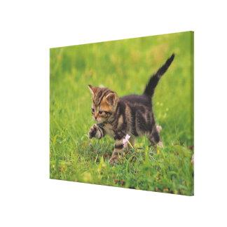 Kitten exploring lawn canvas print