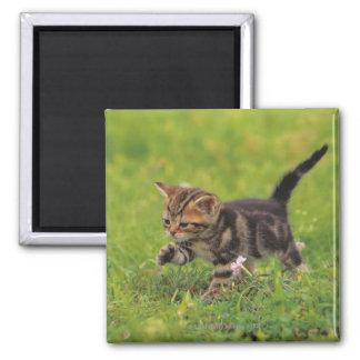 Kitten exploring lawn magnet