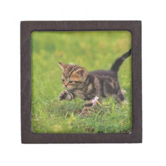 Kitten exploring lawn premium trinket box