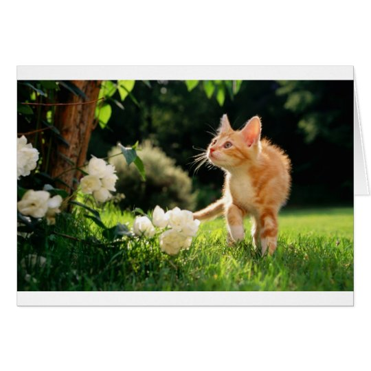 Kitten Exploring Outside by some Flowers Card