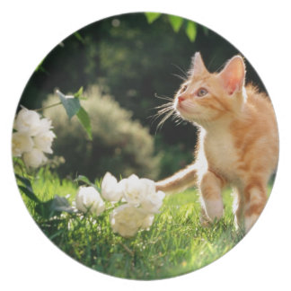 Kitten Exploring Outside by some Flowers Party Plates