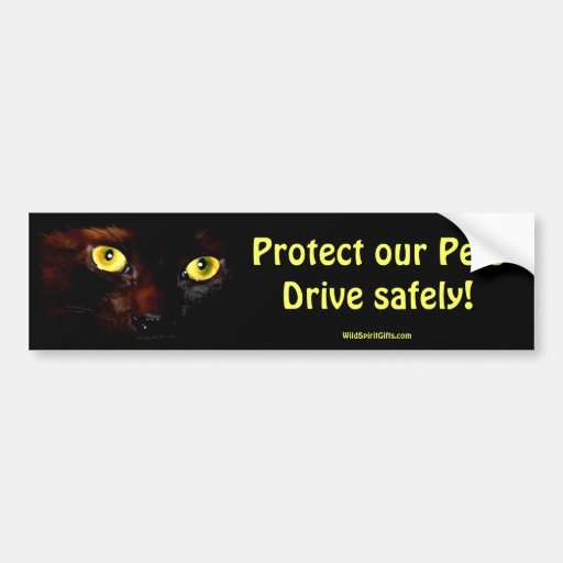 KITTEN EYES Collection Car Bumper Sticker
