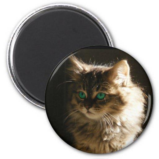 Kitten eyes magnets