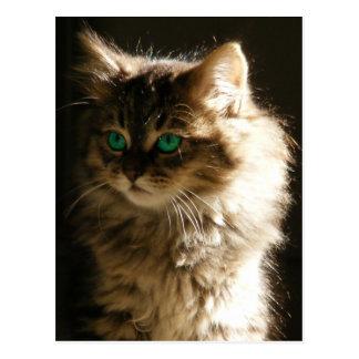 Kitten Eyes Postcards