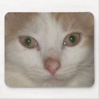 kitten face 1 mousepad