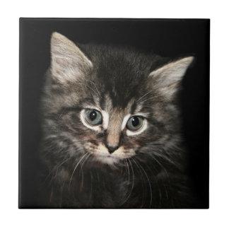 Kitten face tiles
