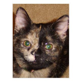 kitten face upclose postcard
