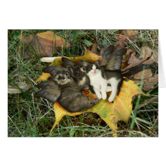 Kitten Fairies Greeting Card