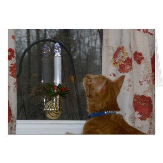 Kitten First Christmas Greeting Card
