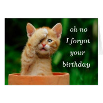kitten forgot birthday greeting cards