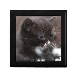 Kitten Giftbox Keepsake Boxes
