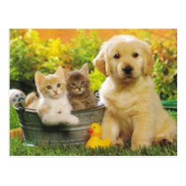 Kitten & Golden Retriever Puppy Dog Blank Postcard