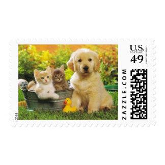 Kitten & Golden Retriever Puppy Dog Postage Stamps