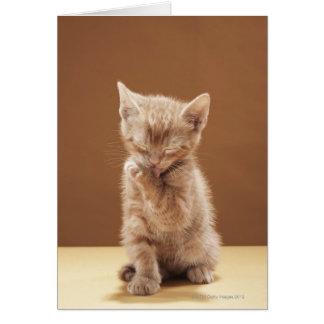 Kitten grooming card