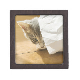 Kitten hiding in paper bag keepsake box