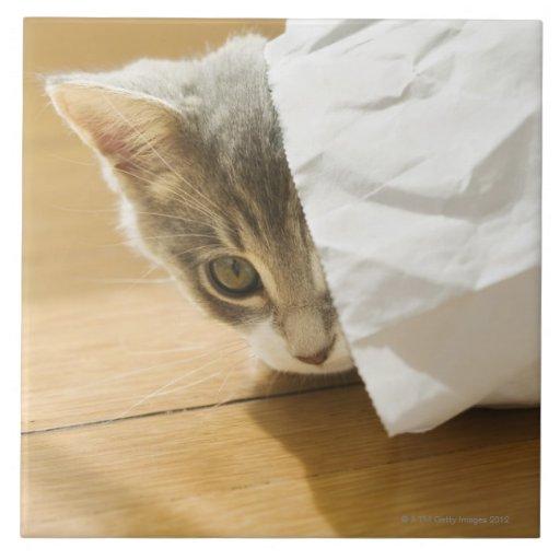 Kitten hiding in paper bag tile