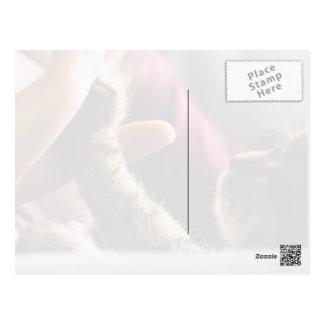 Kitten high-five postcard