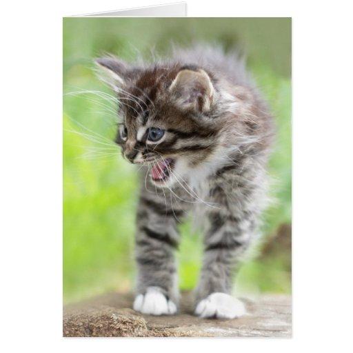 cat going crazy
