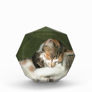 Kitten Hug Award