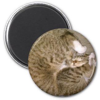 Kitten in a Ball Magnet
