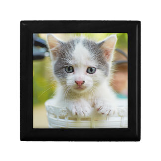 Kitten In A Basket On A Bicycle Jewelry Box