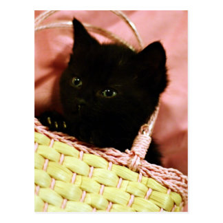 Kitten in a Basket Postcard
