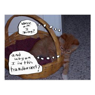 Kitten in a Handbasket Postcard