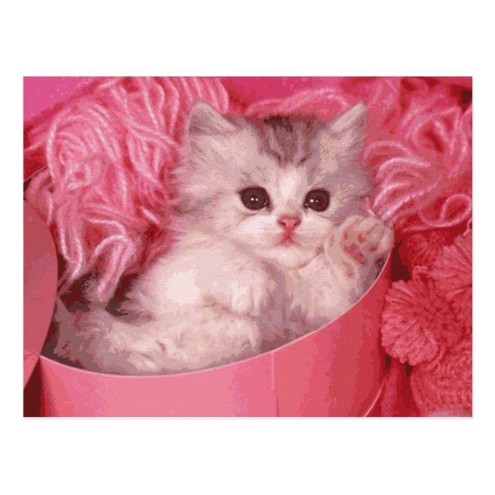 Kitten in A Pink Box Postcard