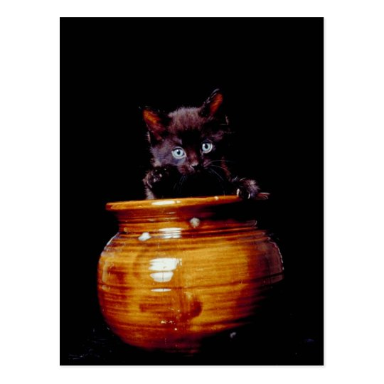 Kitten in a Pot Postcard