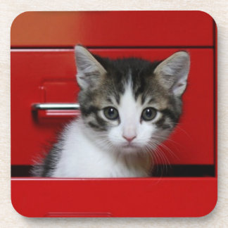 Kitten in a red drawer coasters