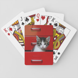 Kitten in a red drawer playing cards