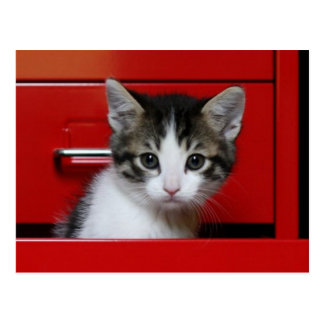 Kitten in a red drawer postcard
