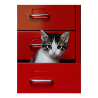 Kitten in a red drawer poster