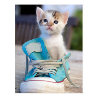 Kitten In A Shoe Postcard