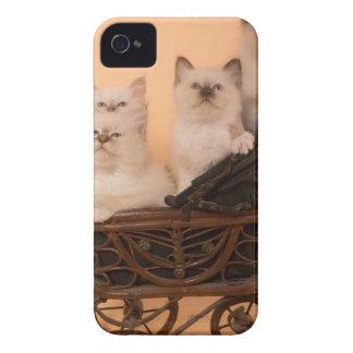 kitten in a stroller coque iPhone 4 Case-Mate