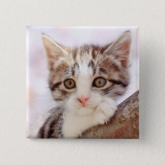 Kitten In A Tree Button