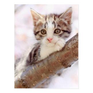 Kitten In A Tree Postcard