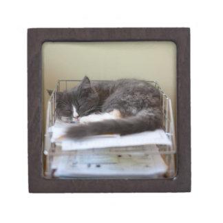 Kitten in an office in box