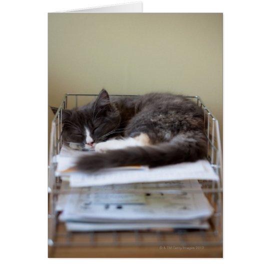 Kitten in an office in box card