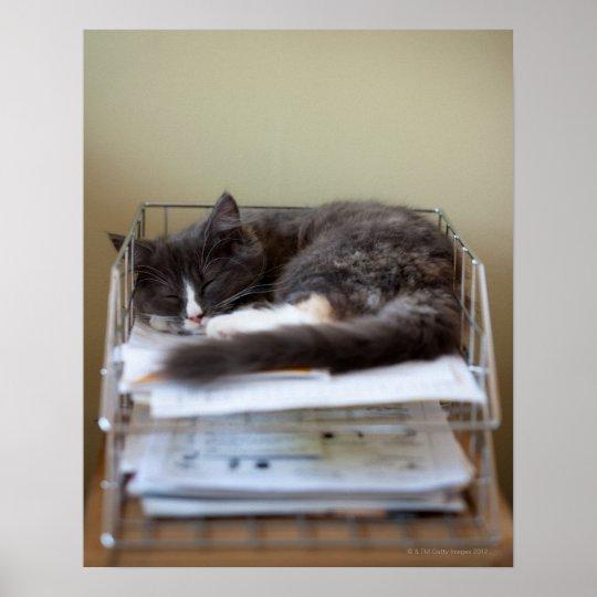 Kitten in an office in box poster