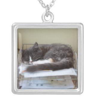 Kitten in an office in box square pendant necklace