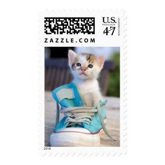 Kitten In Blue Shoe Postage