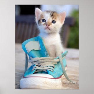 Kitten In Blue Shoe Poster